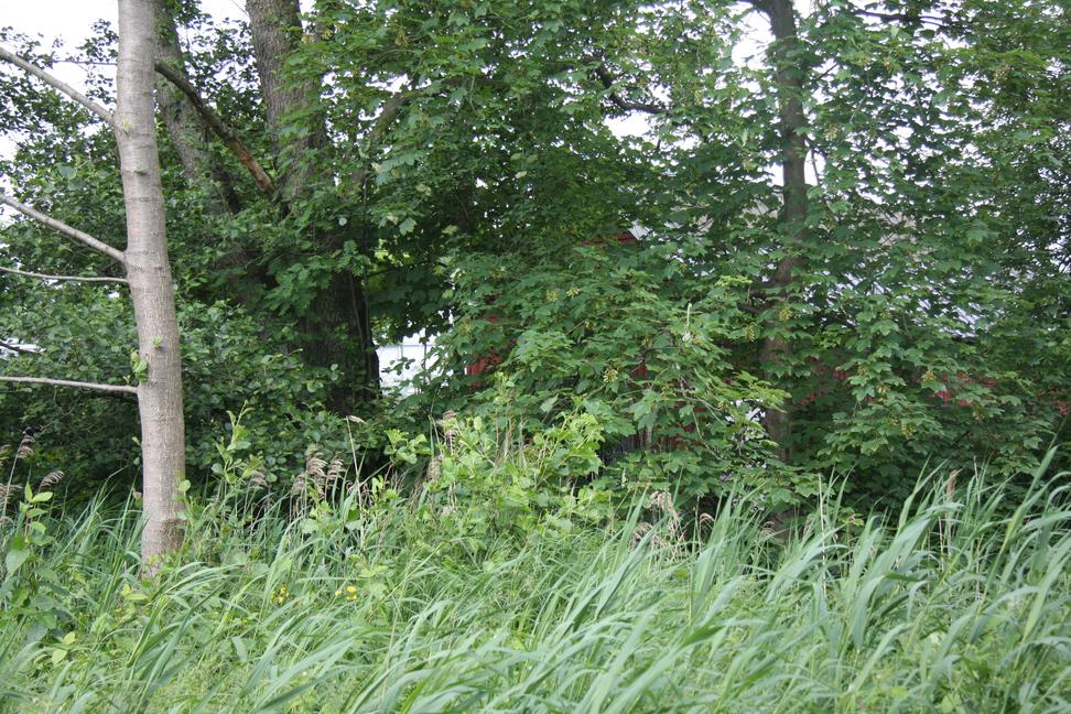 Fra Gladsaxe Kommunes notat om afskærmende beplantning. Man ser tydeligt, at afskærmningen ikke fungerer.