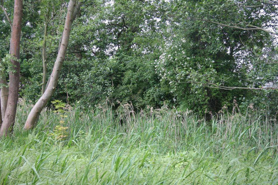 Fra Gladsaxe Kommunes notat om afskærmende beplantning